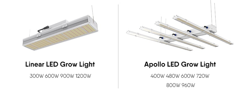 LED grow lights for cannabis cultivation