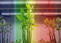 What are the effects of different spectra/colors on plants?